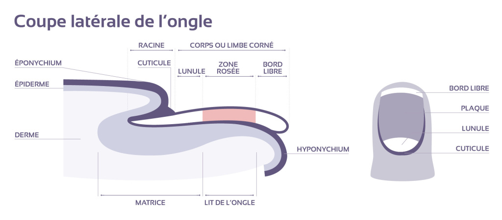 coupe_ongle